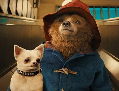 paddington costume